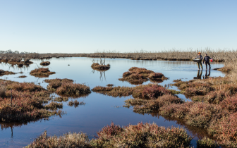 An urgent call for ecosystem restoration action